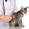 Ветеринарные клиники в Яшкино